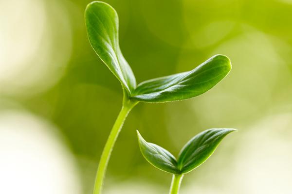 绿色清香——植物自我防御的武器